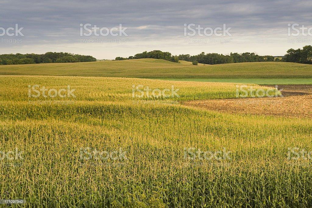 Stormy Farmfield royalty-free stock photo