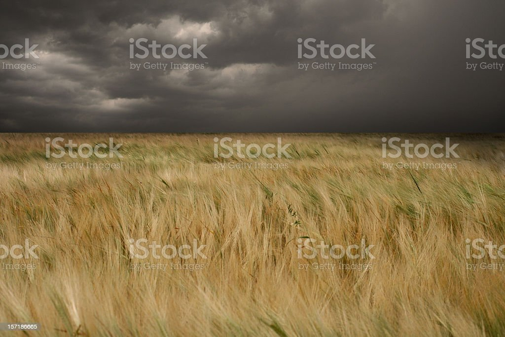 Stormy Meadow royalty-free stock photo