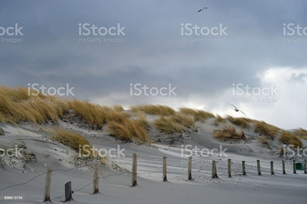 Stormy skies above the Northsea dunes stock photo
