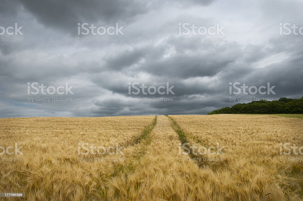 Stormy Sky Over Barley Field stock photo