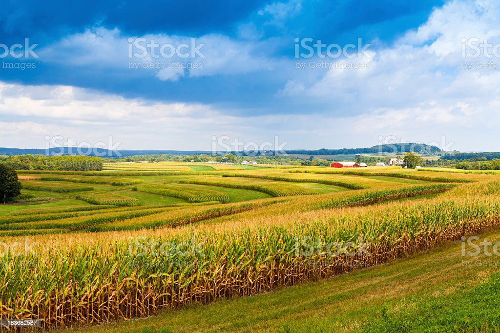 Stormy sky over corn field in American countryside stock photo