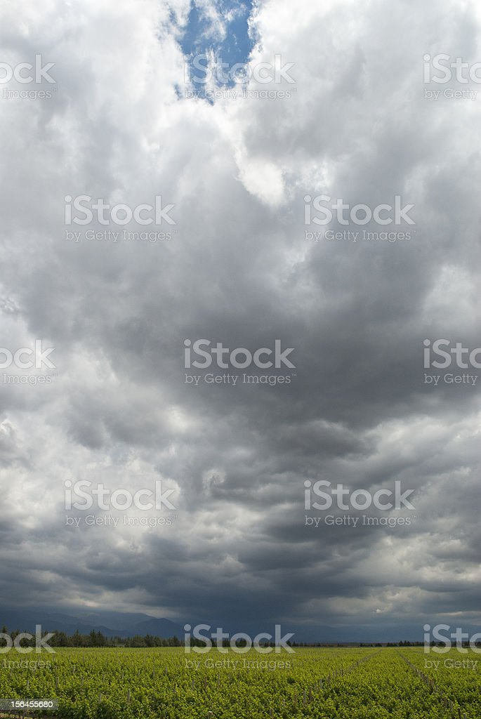 Stormy Sky Over Vineyard stock photo
