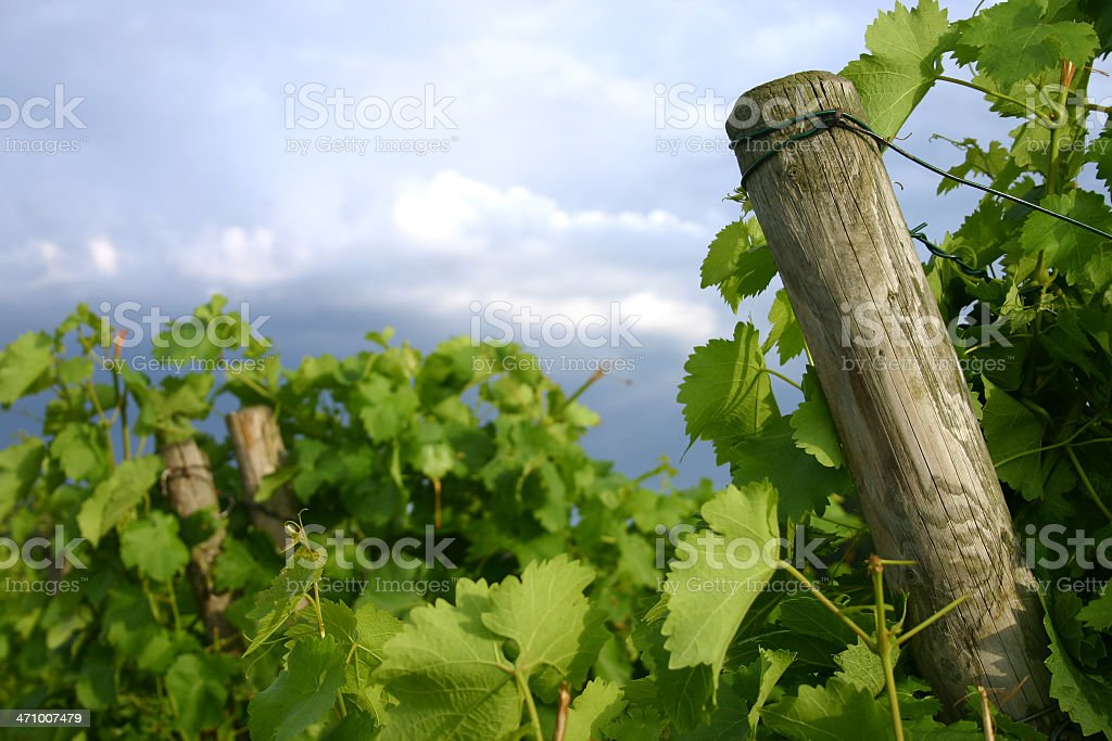 Stormy sky over vineyard - room for copy royalty-free stock photo