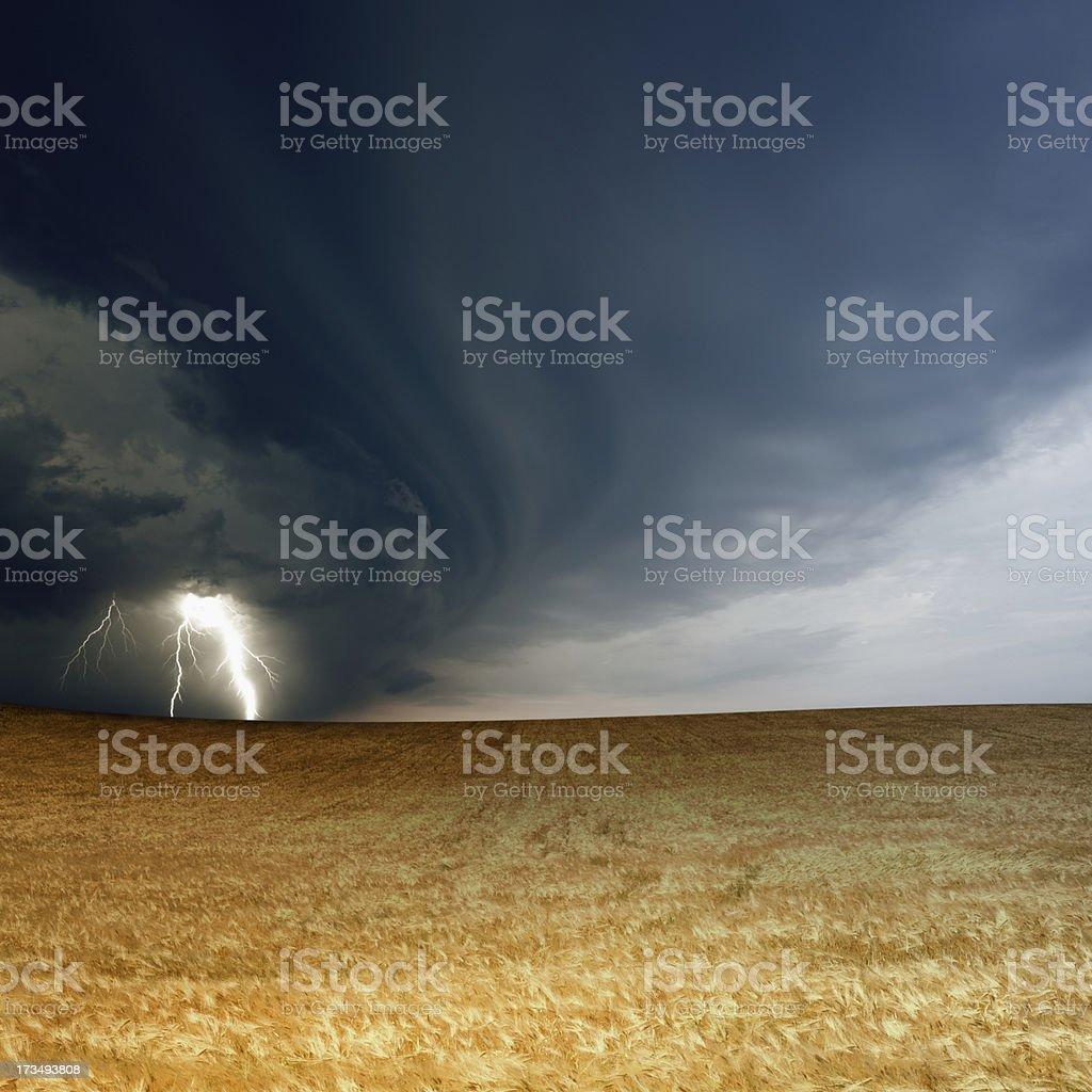 Stormy sky, ripe barley stock photo
