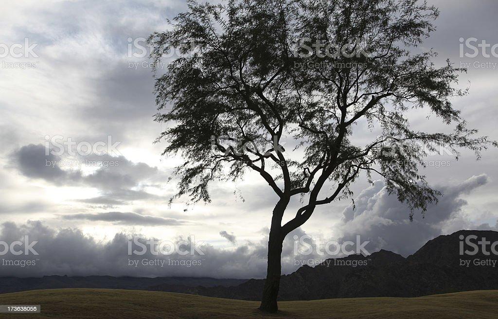 stormy tree stock photo