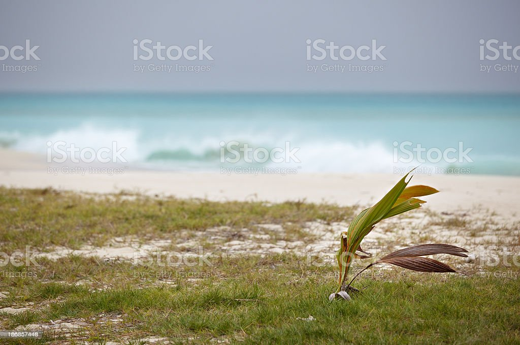 Stormy Weather At Caribbean Beach stock photo