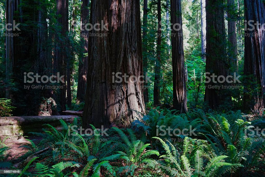 Stout Grove Scene stock photo