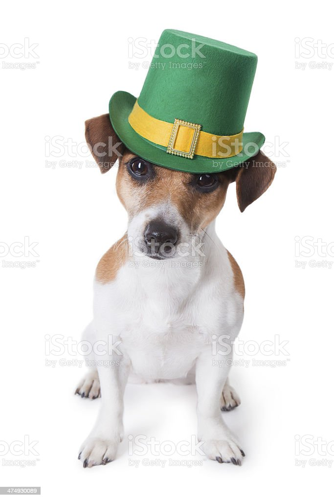 St.Patrick's Dog stock photo