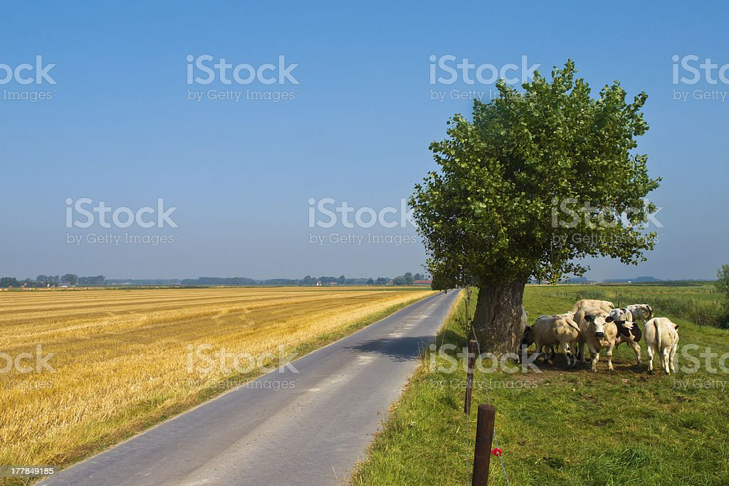 Straight Country Road royalty-free stock photo