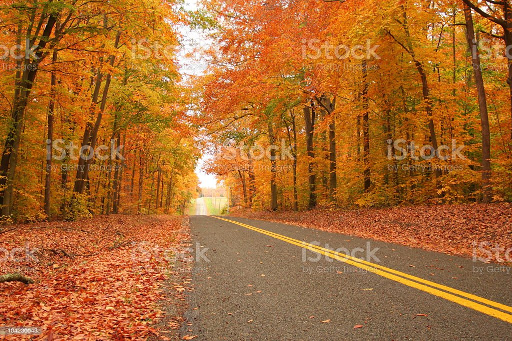 Straight drive through a dense autumn forest stock photo