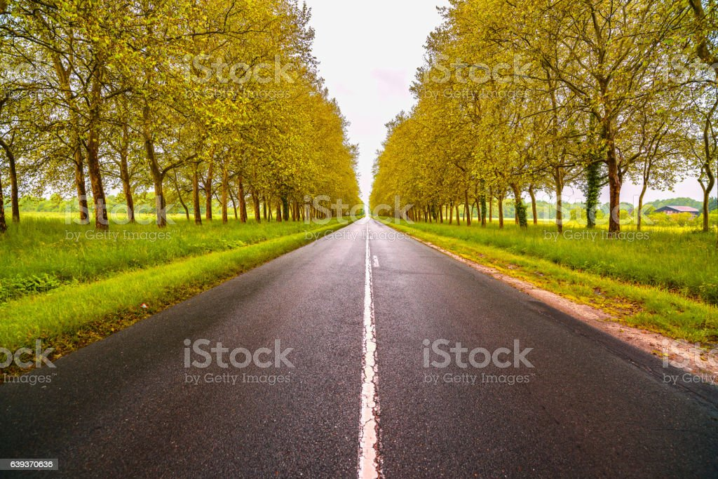 Straight empty wet road between trees. Loire valley. France. stock photo