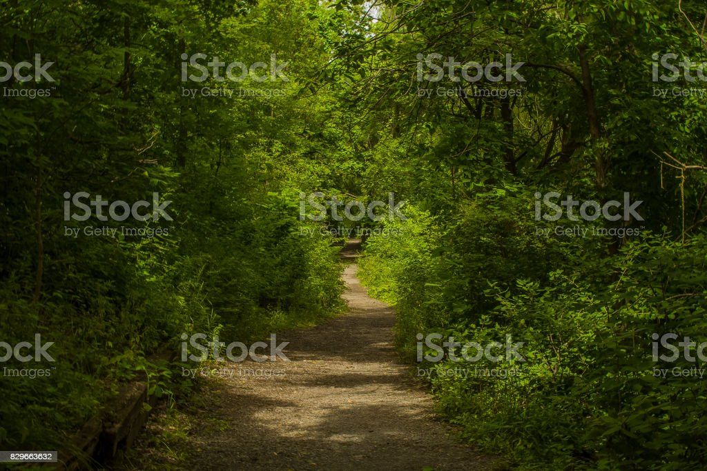Straight Forest Path stock photo
