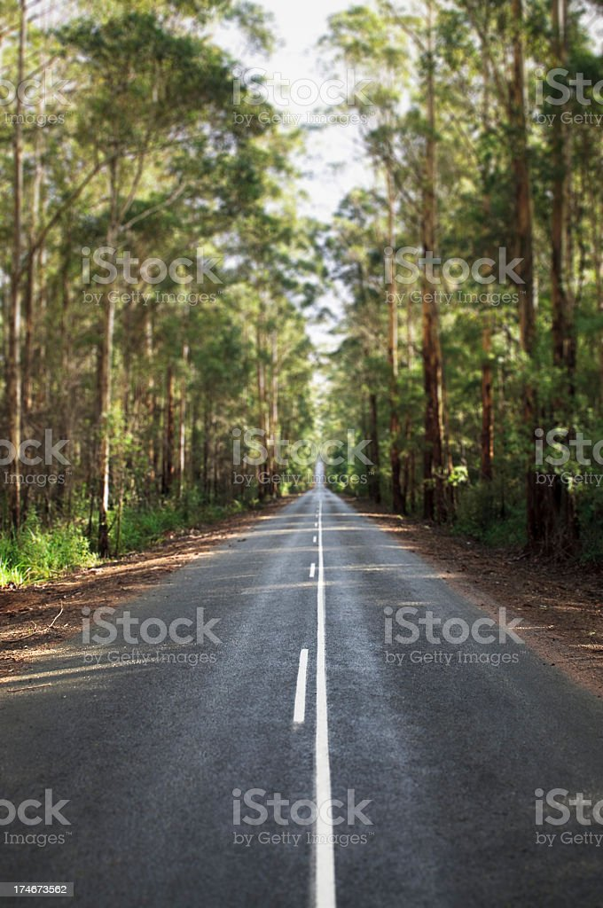 Straight forest road stock photo
