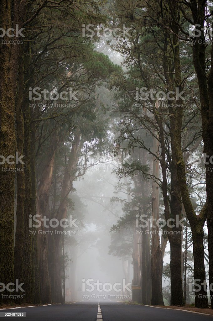 Straight road to fog stock photo