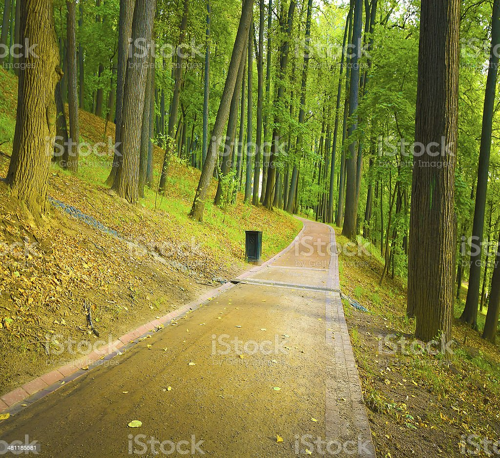 straight spring alley becoming green in the park royalty-free stock photo