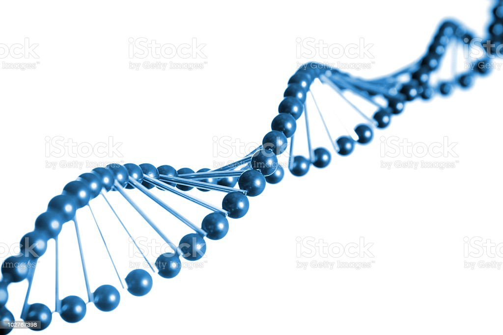 DNA strand model royalty-free stock photo