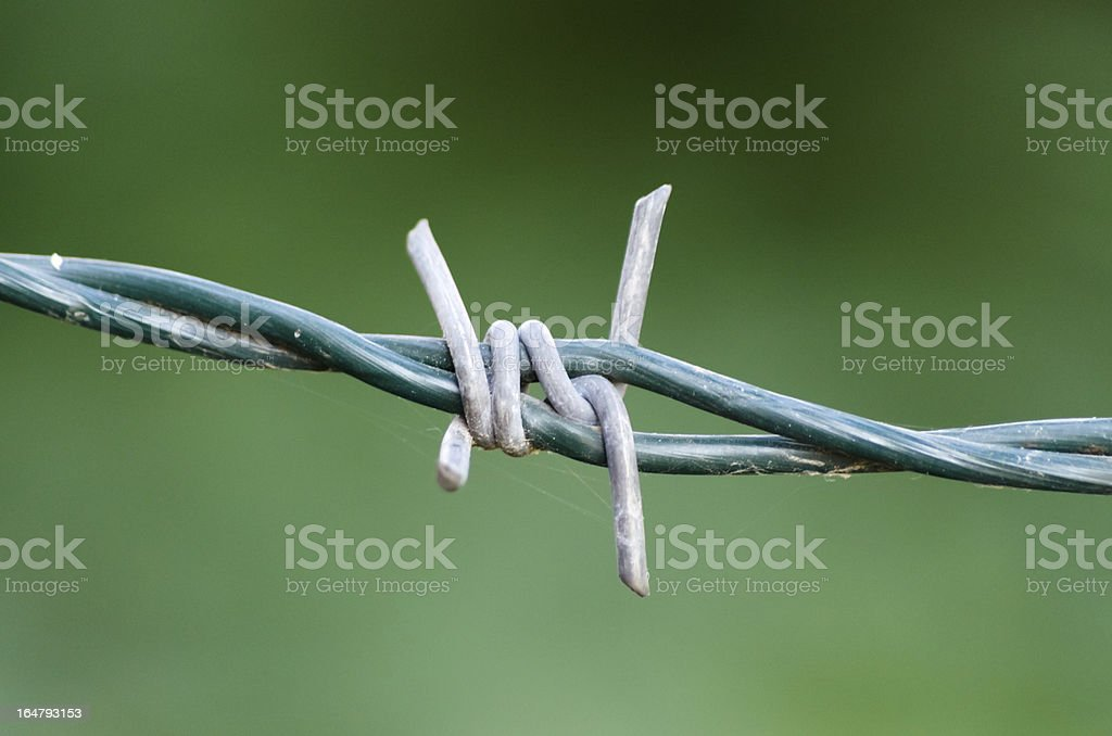 Strand of barbed wire royalty-free stock photo