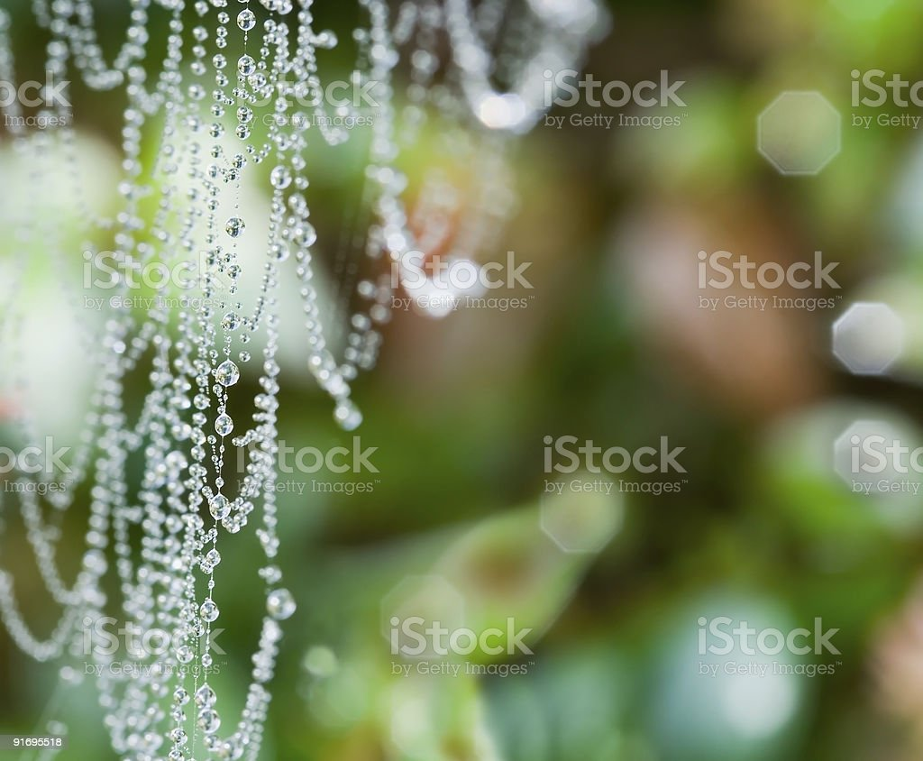 Strand of Pearls stock photo
