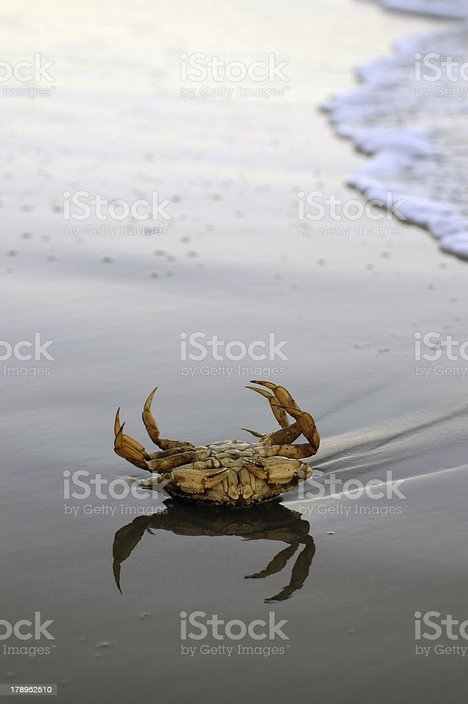 Stranded crab - failure royalty-free stock photo