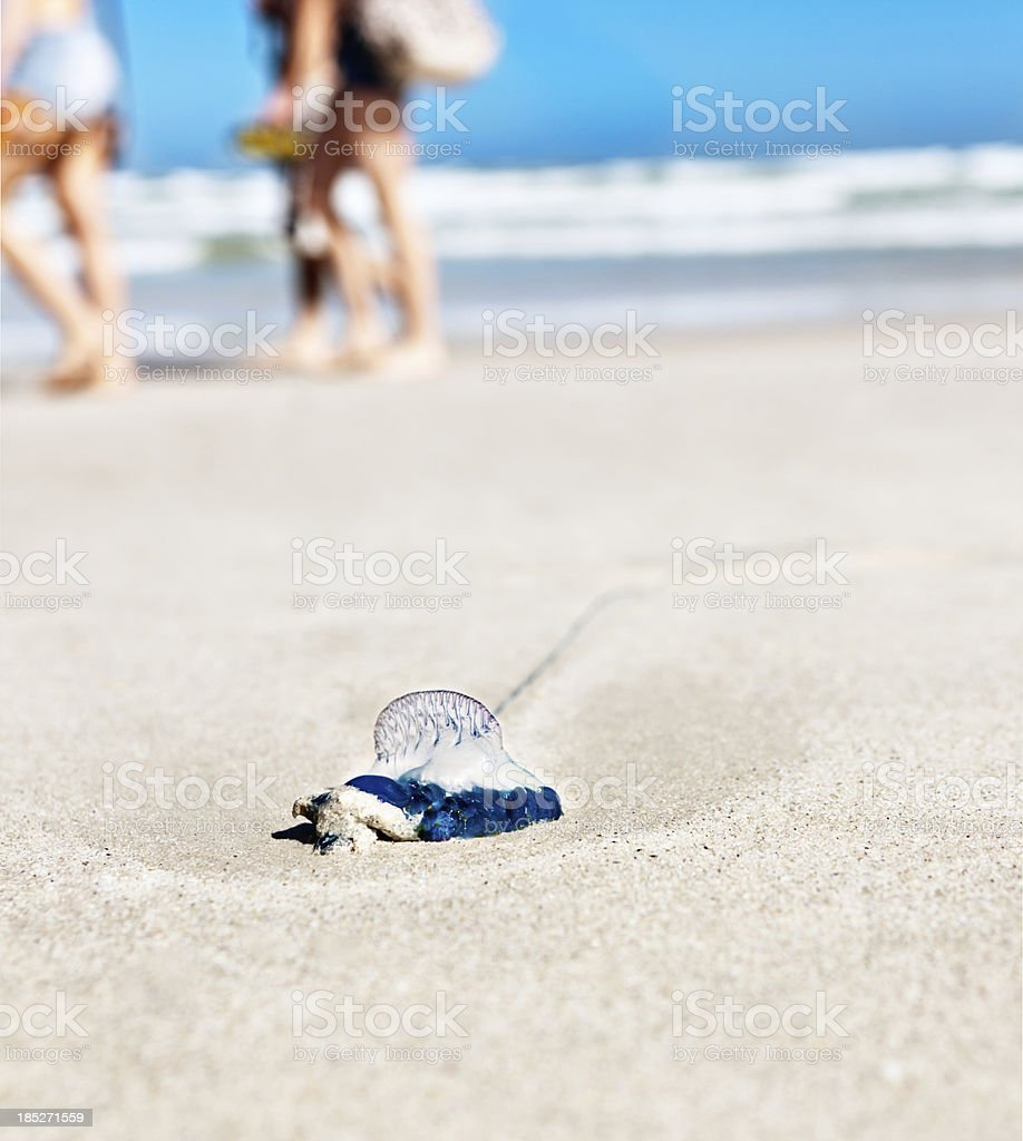 Stranded jellyfish lying abandoned on a sandy beach stock photo