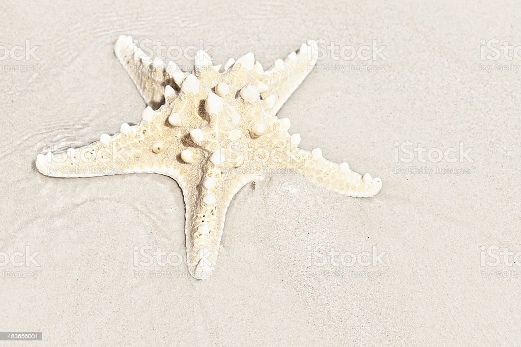 Stranded. Lone starfish on sandy beach. royalty-free stock photo