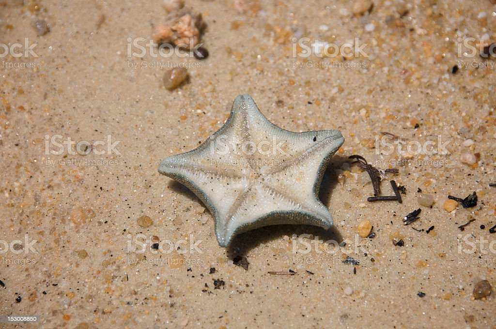 Stranded Starfish royalty-free stock photo