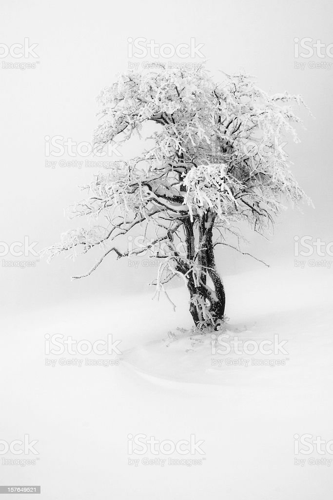 Strange and lonely tree in misty mountain. royalty-free stock photo