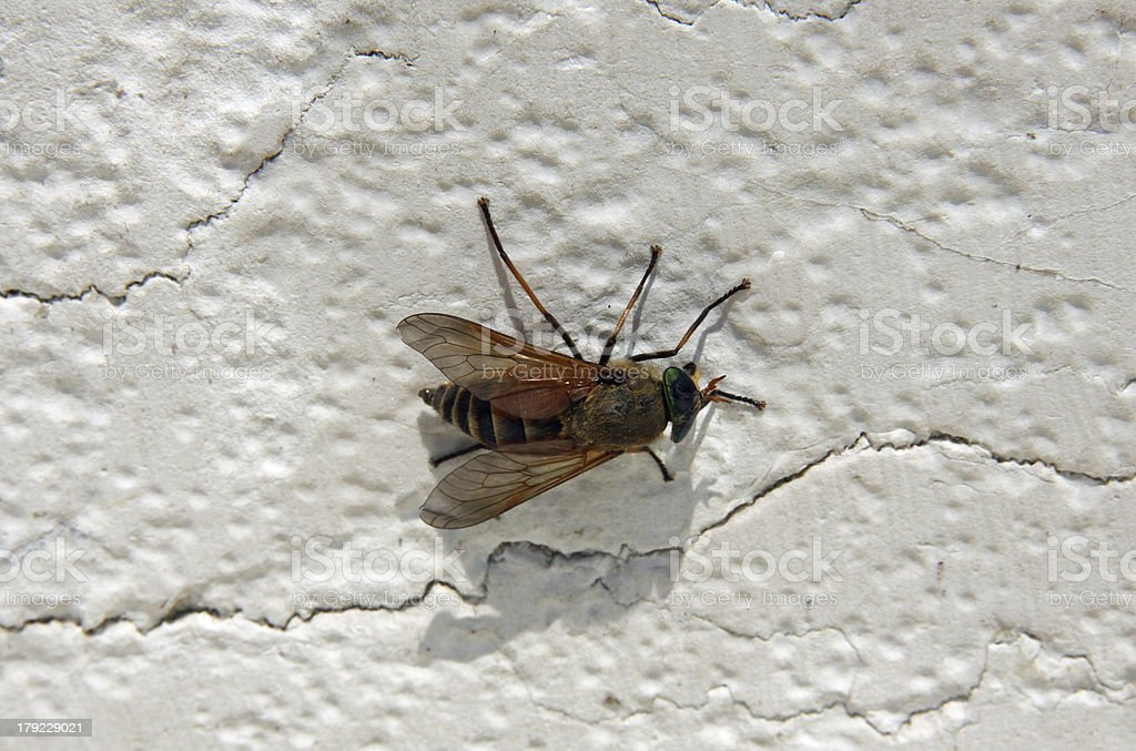 strange insect stock photo