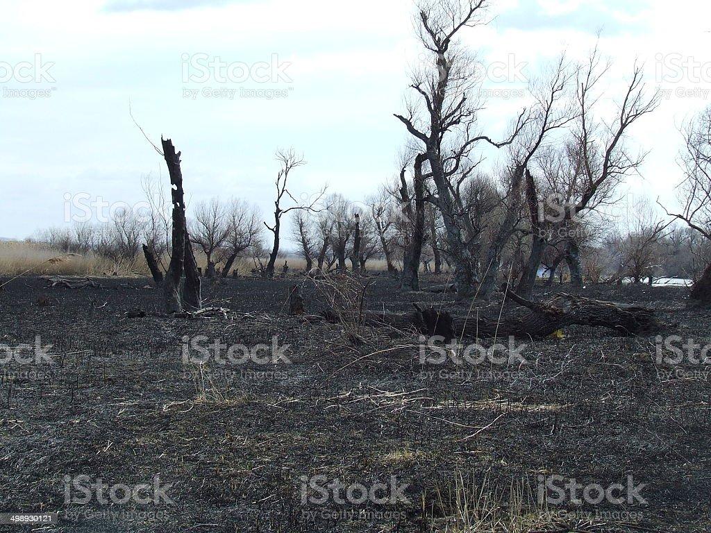 Strange tree stock photo