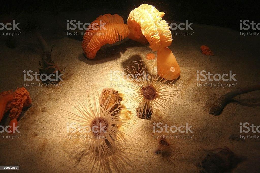 Étonnant monde sous-marin photo libre de droits