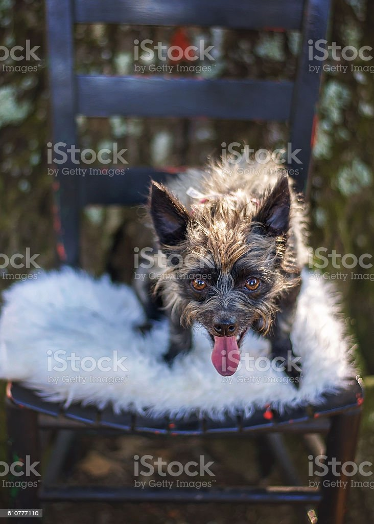 Strange-Looking Mixed Breed Dog stock photo