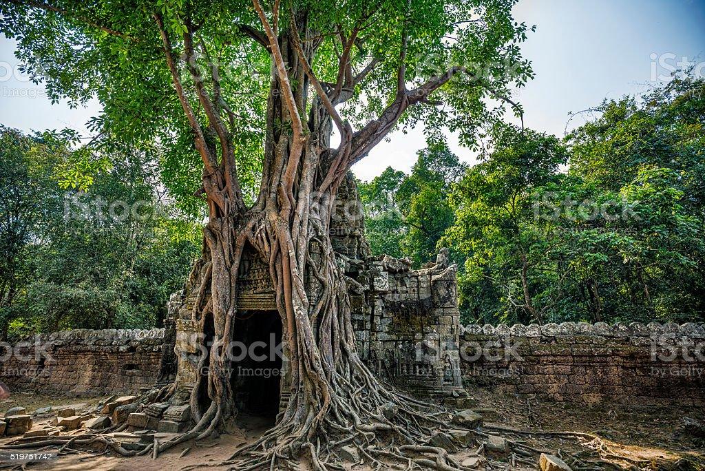 Strangler fig in Ta Som temple Angkor Cambodia stock photo