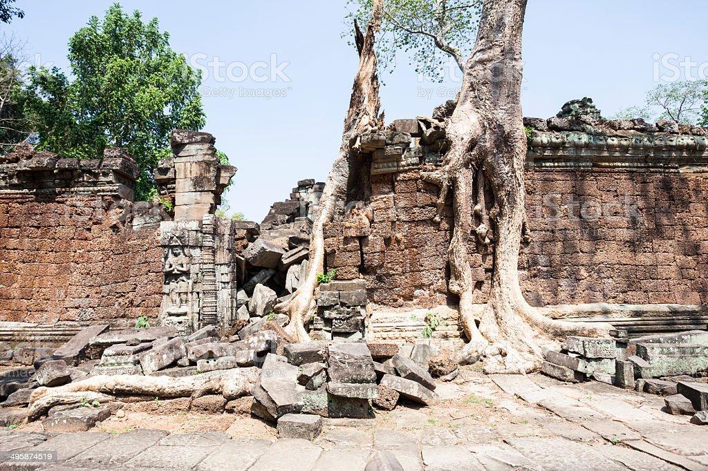 Strangler Fig tree at Preah Khan stock photo