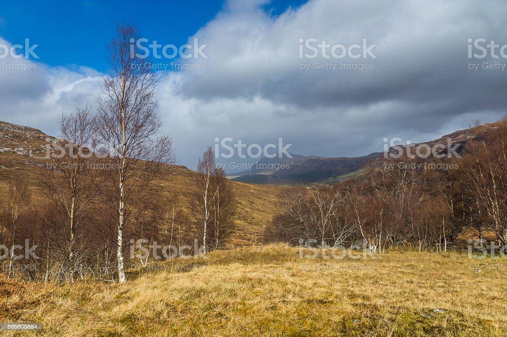 Strath Beag Birch Trees stock photo