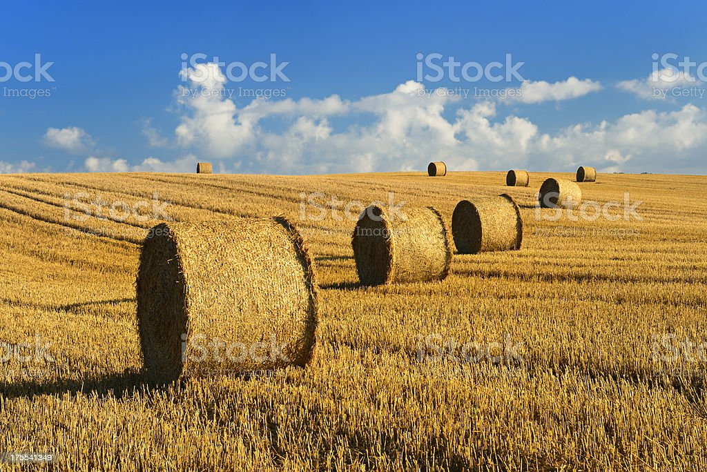 Straw Bale Harvest in Stubble Field under Blue Sky stock photo