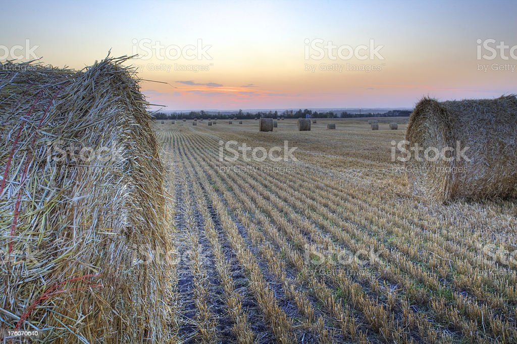 Straw bales at sunset royalty-free stock photo
