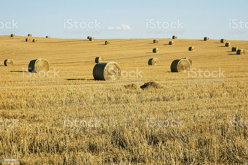 Straw Bales Field royalty-free stock photo