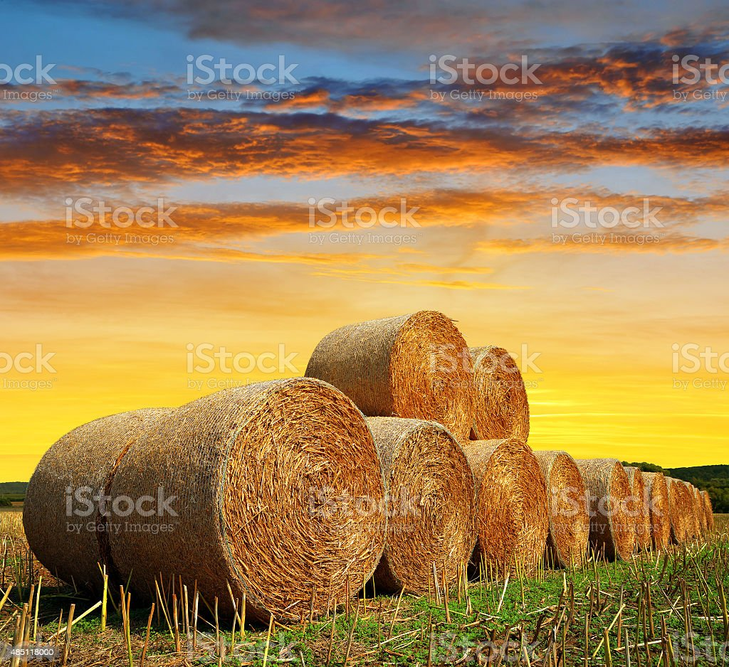 Straw bales on farmland stock photo