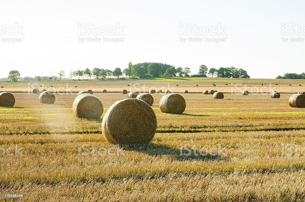 Straw bales royalty-free stock photo