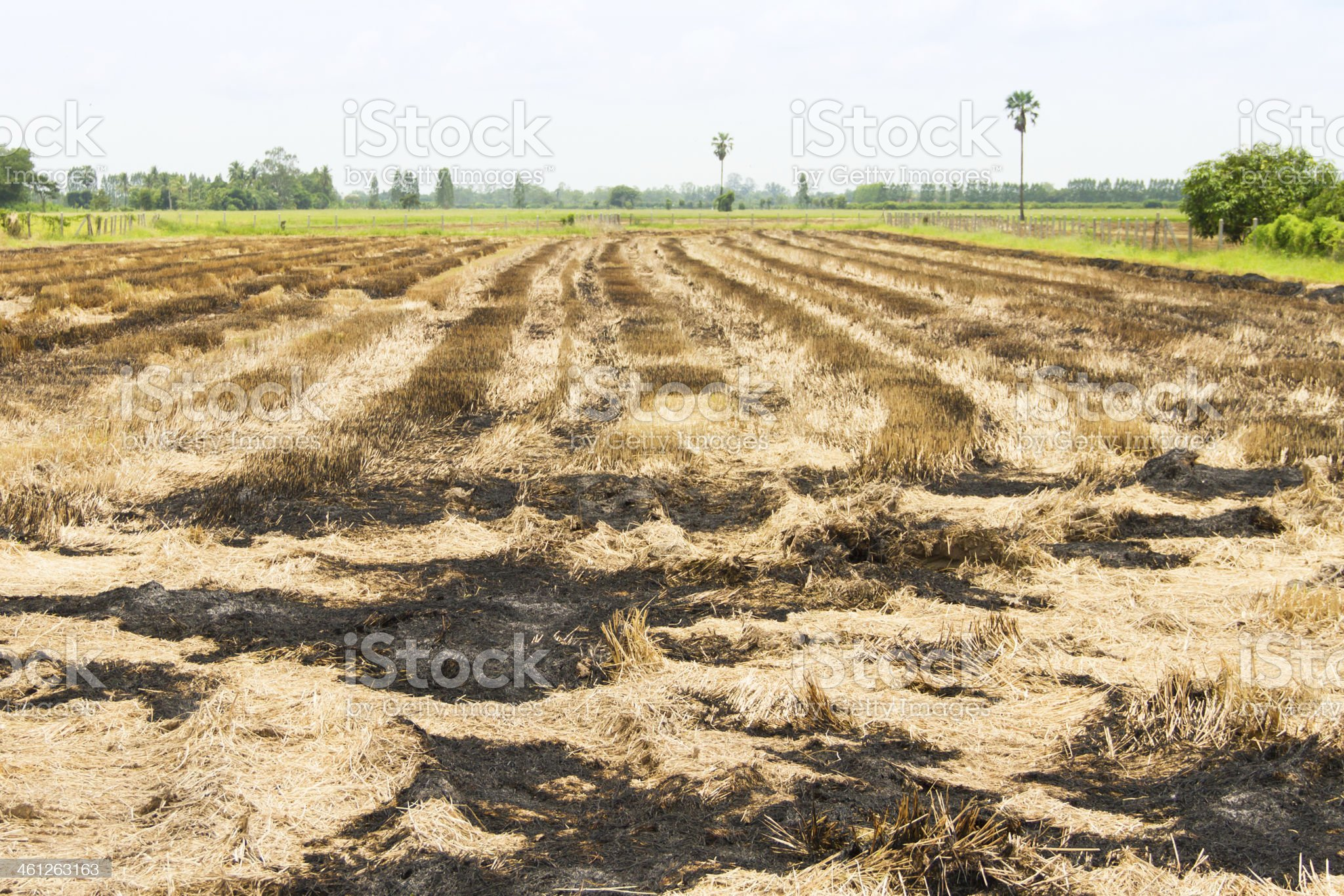 straw field burn after harvesting royalty-free stock photo