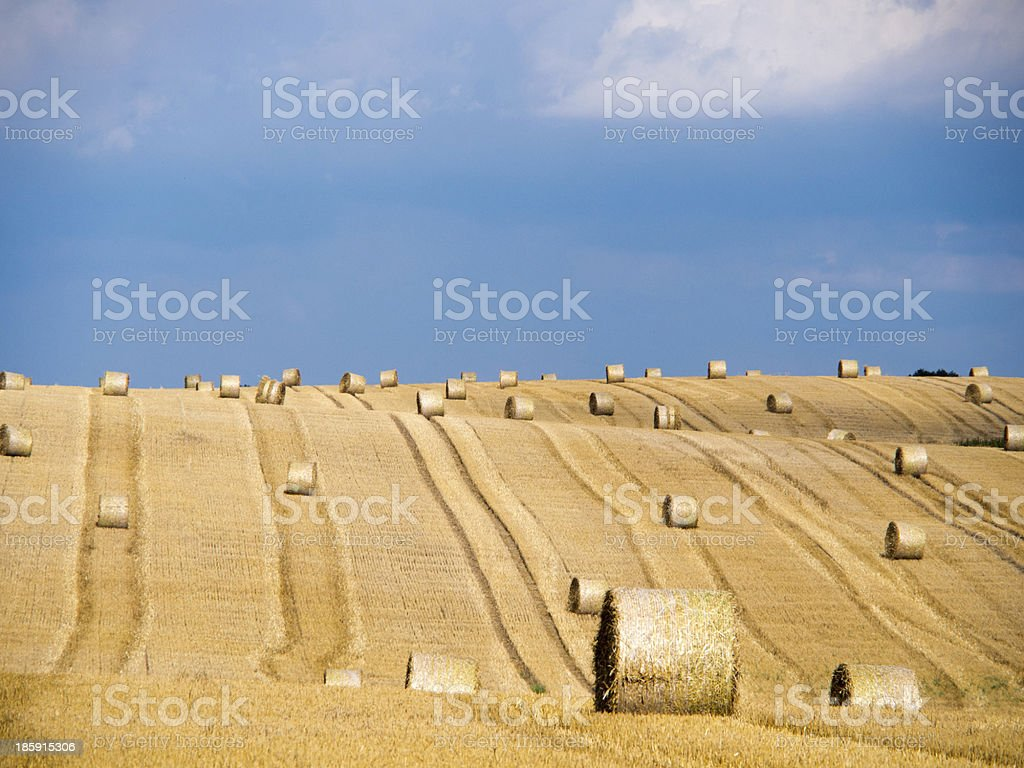straw field stock photo