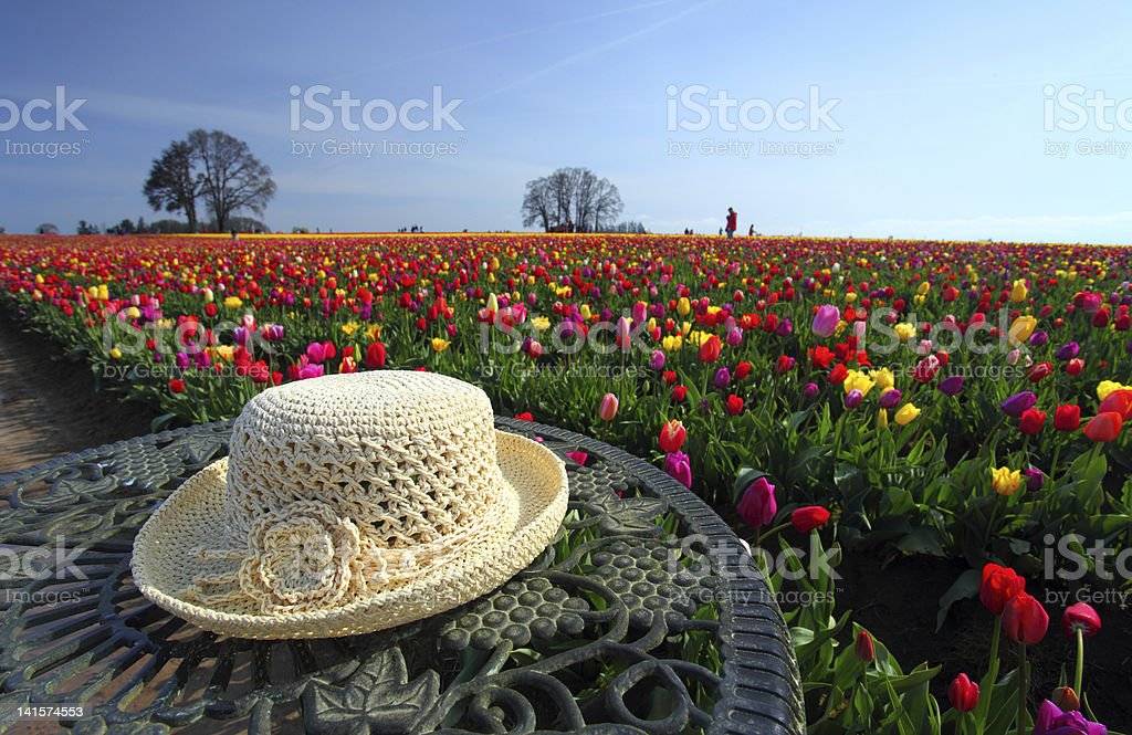 Straw hat and tulip flower garden royalty-free stock photo