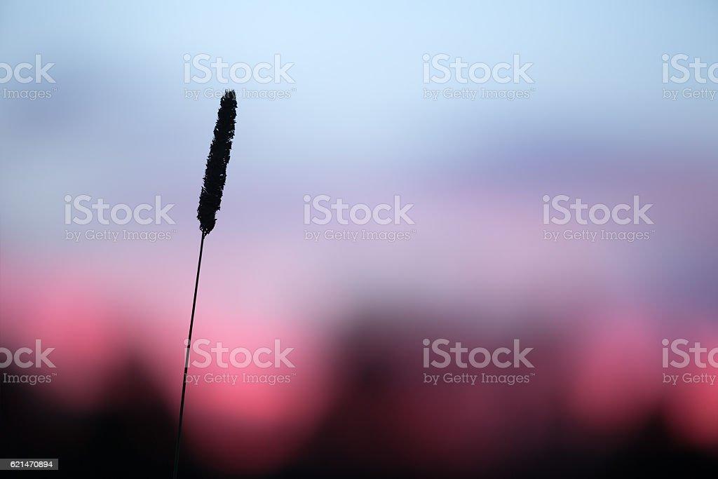 Straw in sunset stock photo