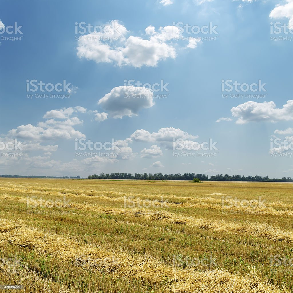 straw in windrows under cloudy sky royalty-free stock photo