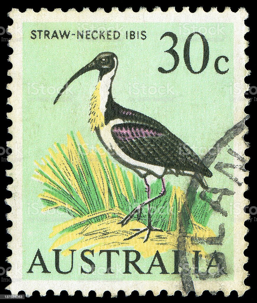 Straw Necked Ibis Stamp stock photo