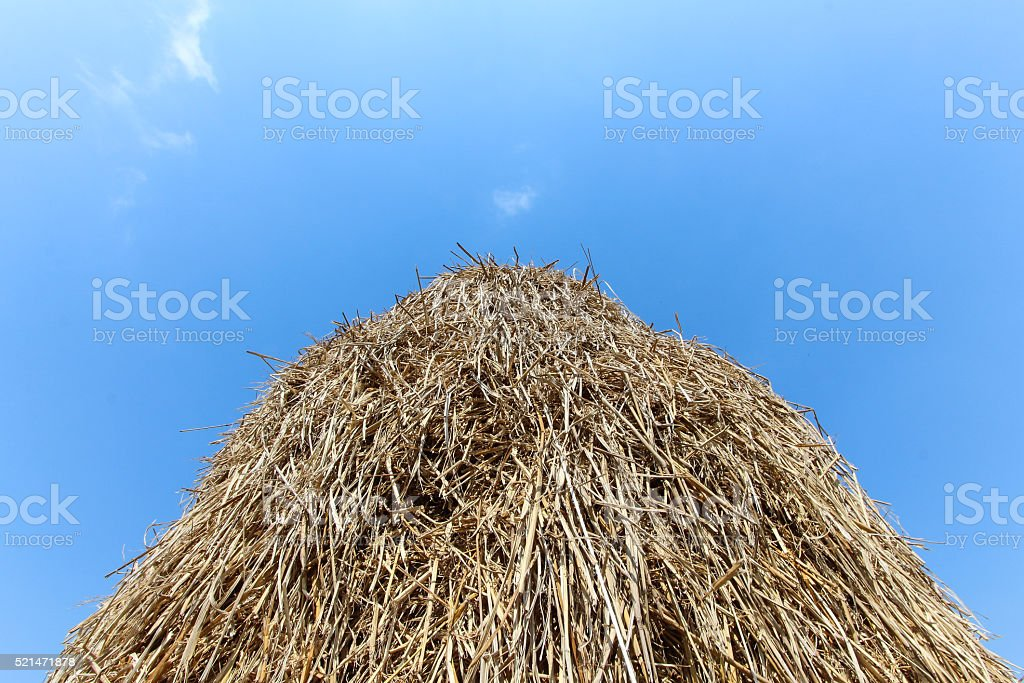 straw on blue sky background. stock photo