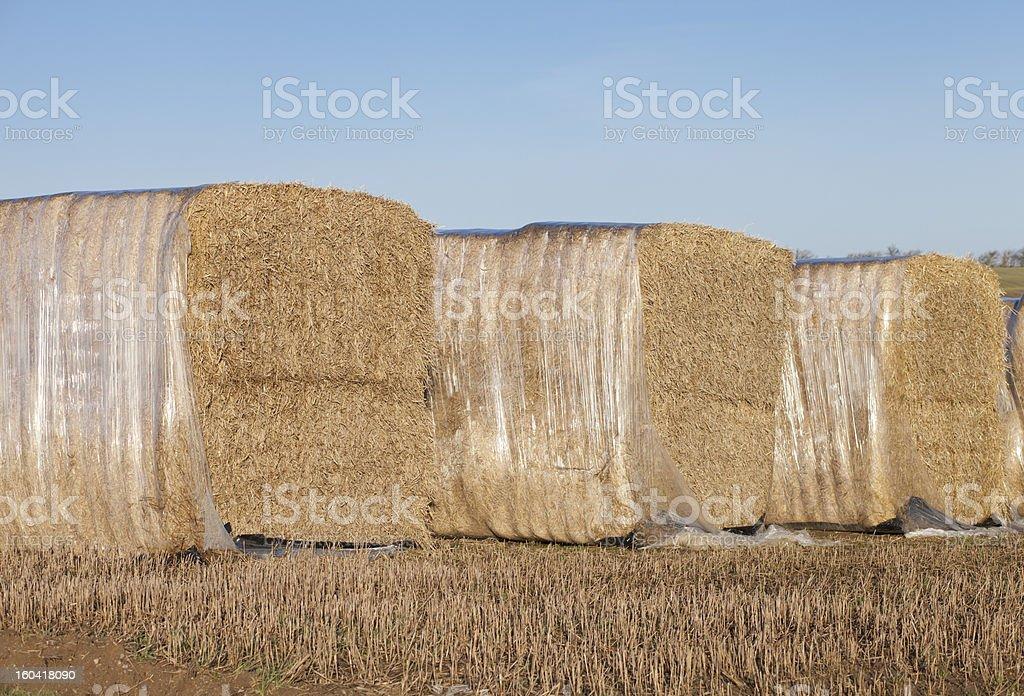 Straw Packed in polyethylene royalty-free stock photo