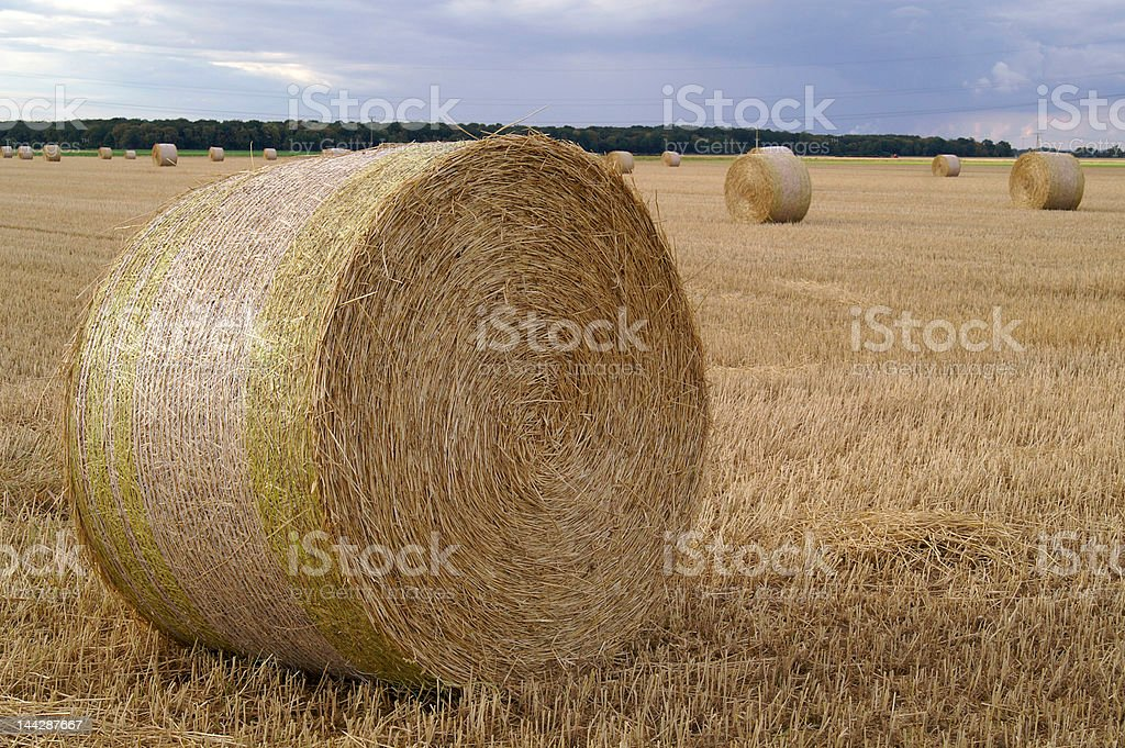 straw royalty-free stock photo