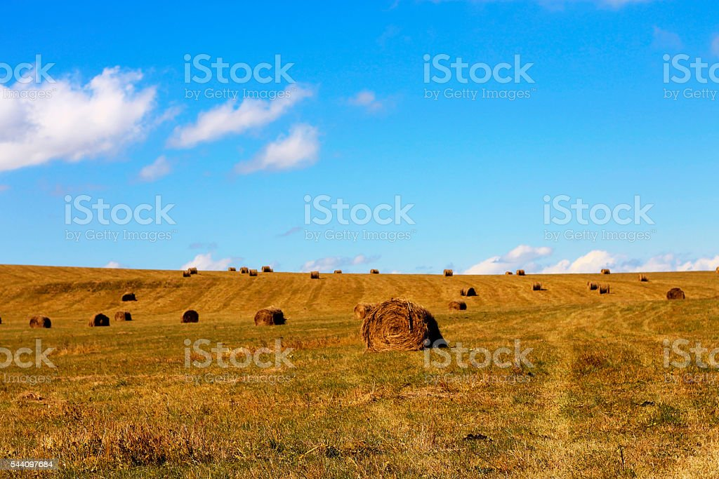 Straw roll bale on the field of farmland stock photo