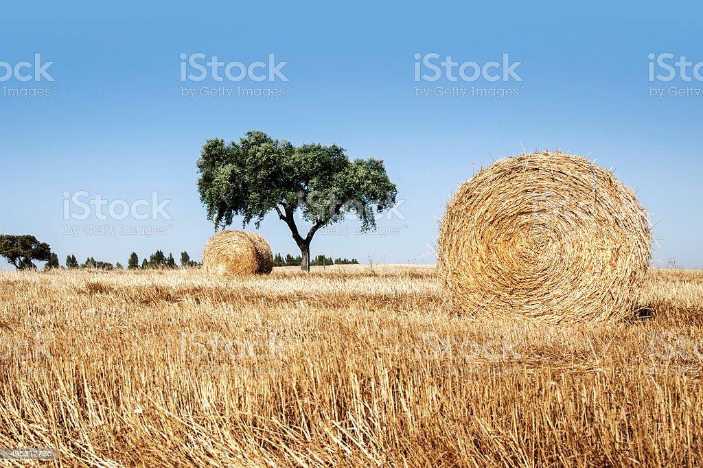 Straw roll in Alentejo, Portugal stock photo